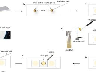 Microslide culture for fungi