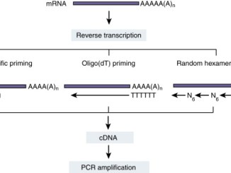 RT-PCR Principle