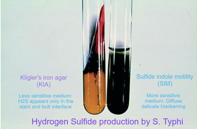 Hydrogen sulfide production test
