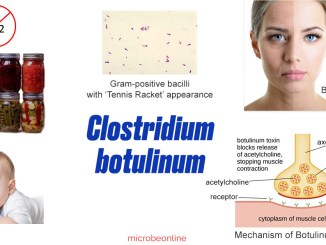 Clostridium botulinum cover image