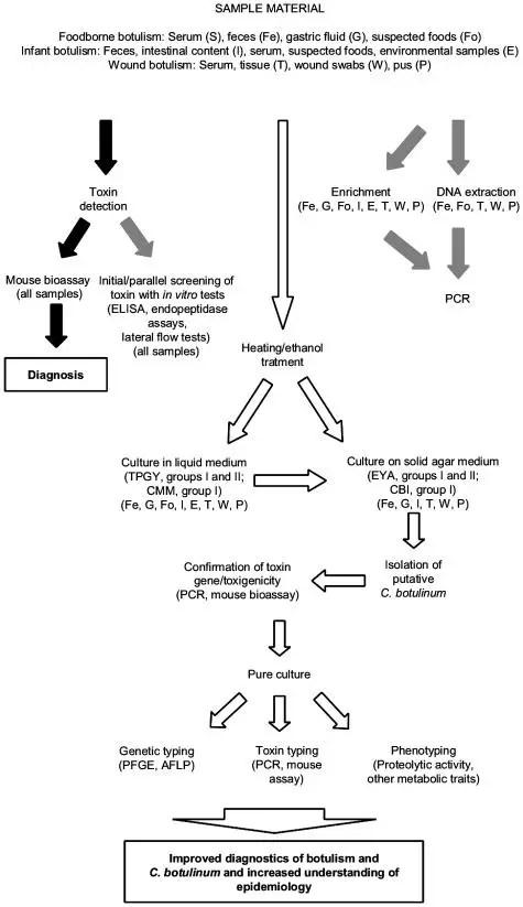 Diagnosis of botulism