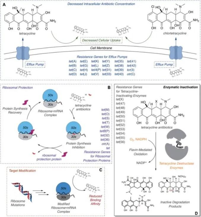 Tetracyclines Mechanism of Resistance