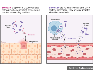 Exotoxin and endotoxin difference
