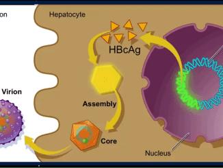 Hepatitis B Core Antigen