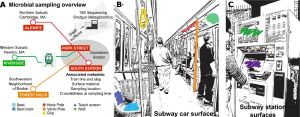 Scared of subway germs? Fear not, for they are harmless