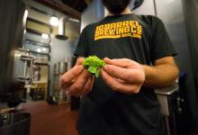 Photo of Dry Hopping Techniques