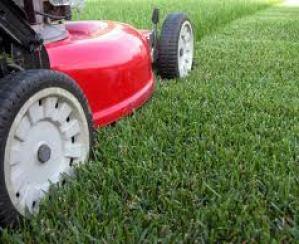 grasscutting.