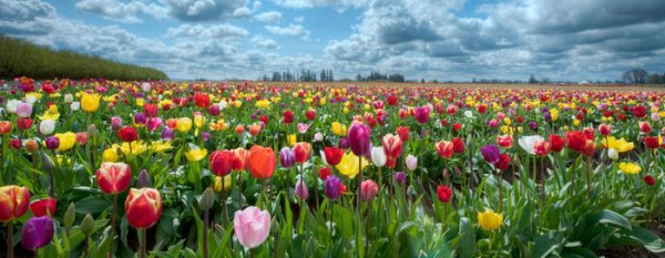 The Tulips of the Sixties - MicroCapClub