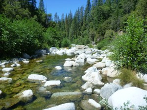 South Yuba River, look closely and see matted dry algae just above waterline on some rocks
