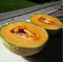 Kansas melon