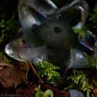 DSC_2265-garden-star