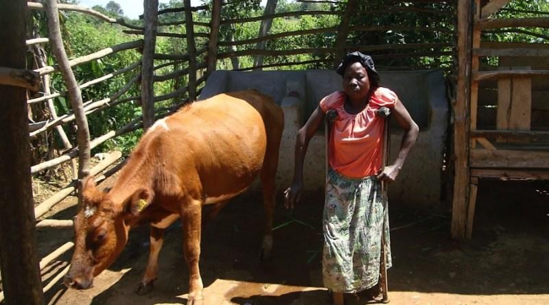 Koeproject voor Boeren