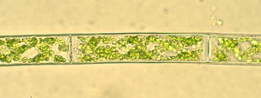Microscopesandmonsters