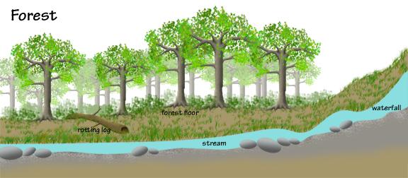 Forest Illust