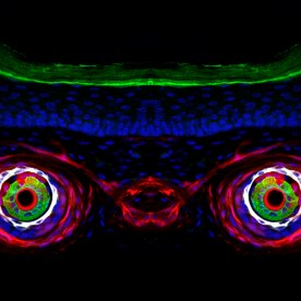 Karl Annusver - Skin image deconvolved
