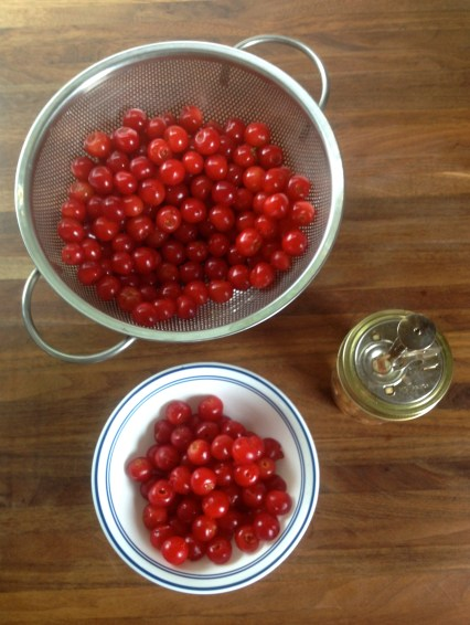 Sour cherries and cherry pitter (getting ready for pie)