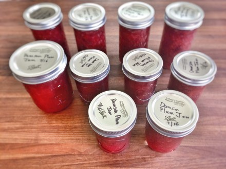 Damson plum jam from tree on the lot