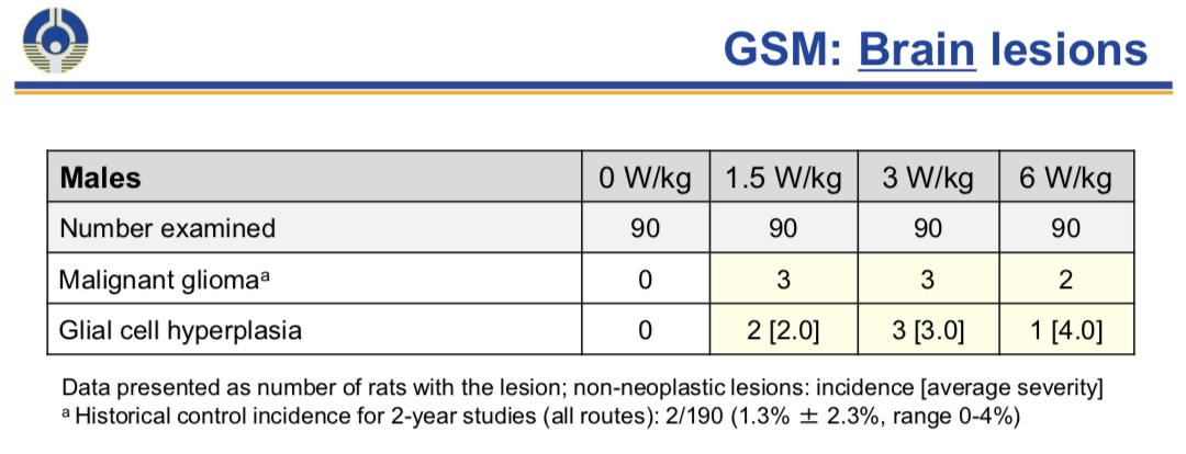 Glioma among male rats exposed to GSM