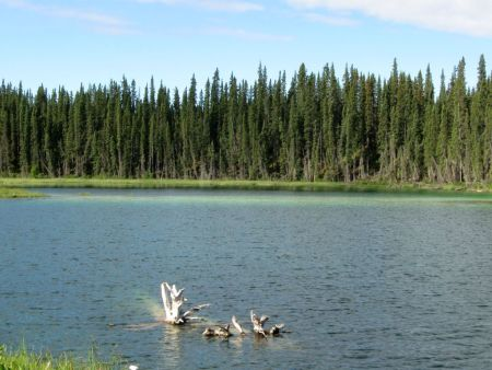 A small lake not far down from Jct 37 on the Cassiar Highway