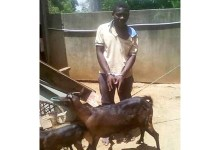 Telugu news Man is accused of raping a goat in Malawi (though he claims he asked the animal's permission first).