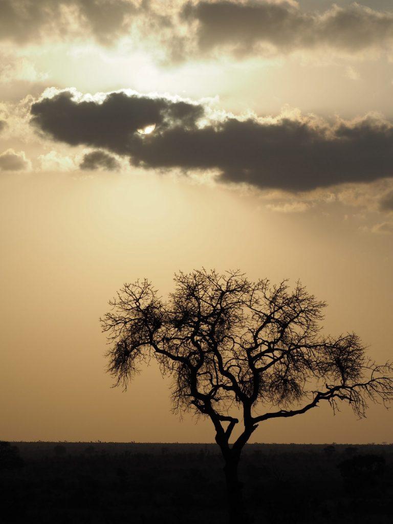South AfricaH12 Leshiba Kruger National Park