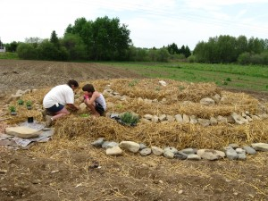 Herb spiral built during a permablitz in Micmac country near Presque Isle, Maine
