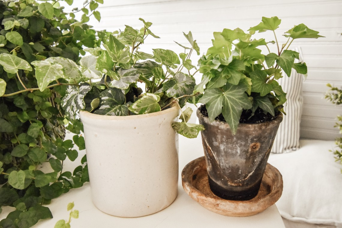 The Best Easy Indoor Plants