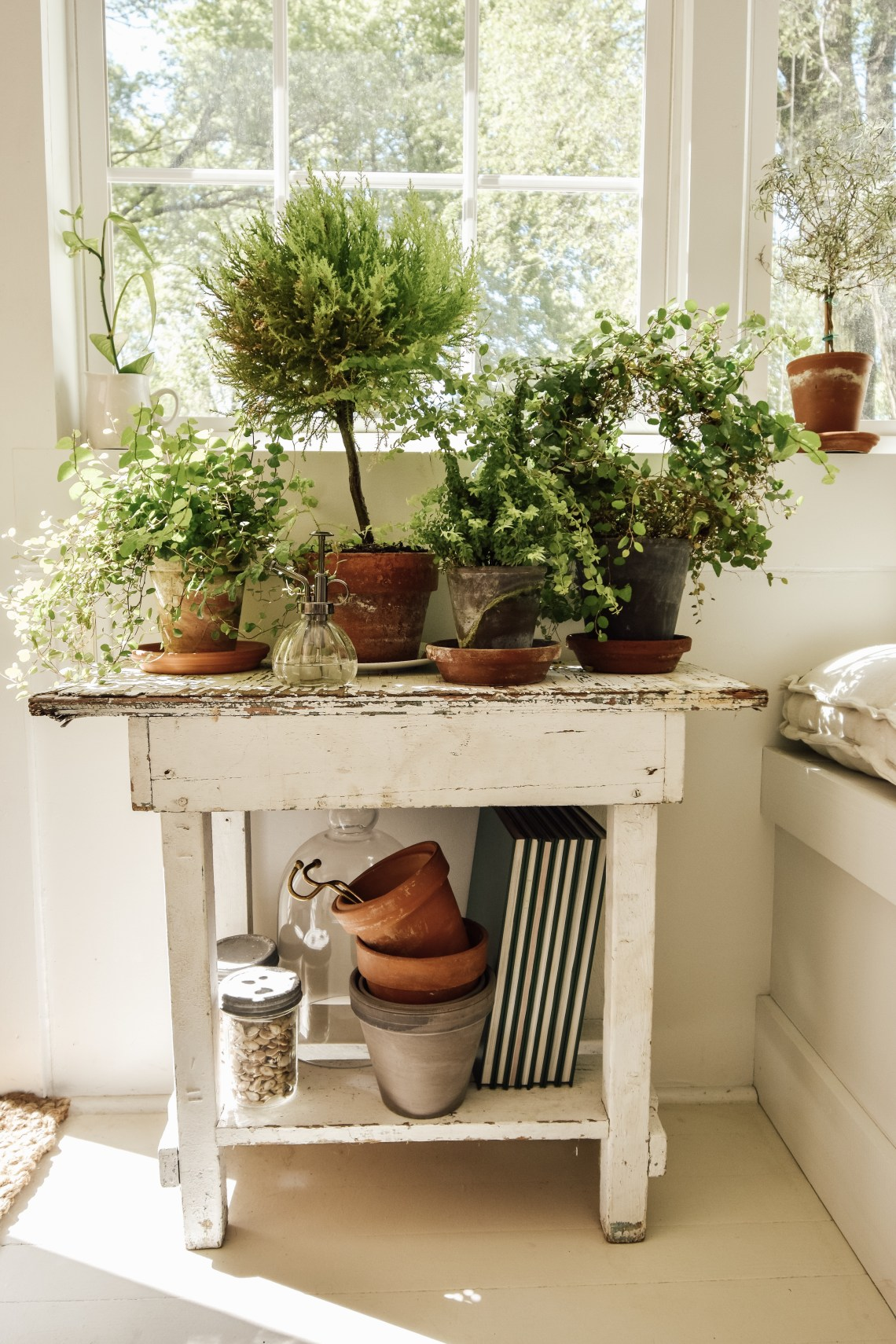 Sunroom Plants and Projects