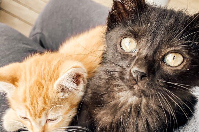 Farm Babe Feature: Kitties