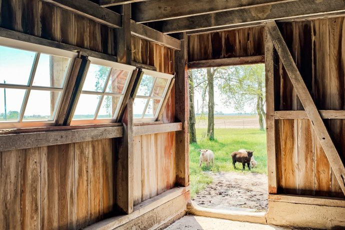 Barn Stable Reveal: Lambs Included!