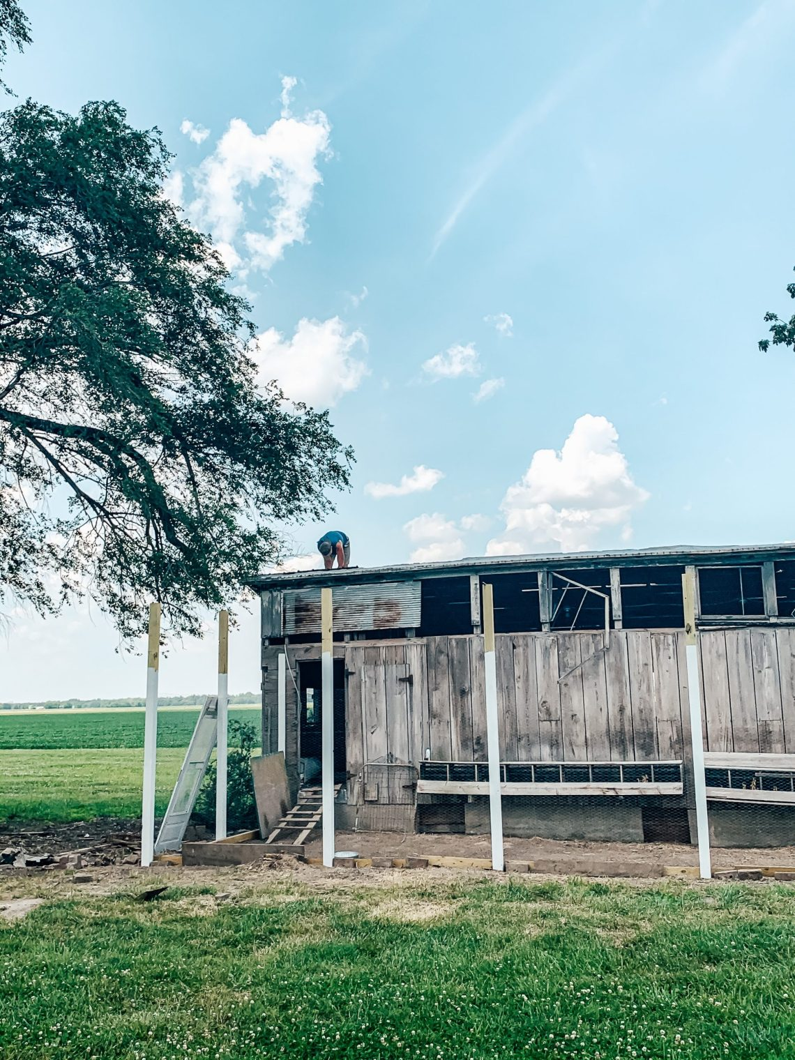 This Week at the Farm: Sweet Summertime