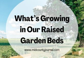 What's Growing in Our Raised Garden Beds