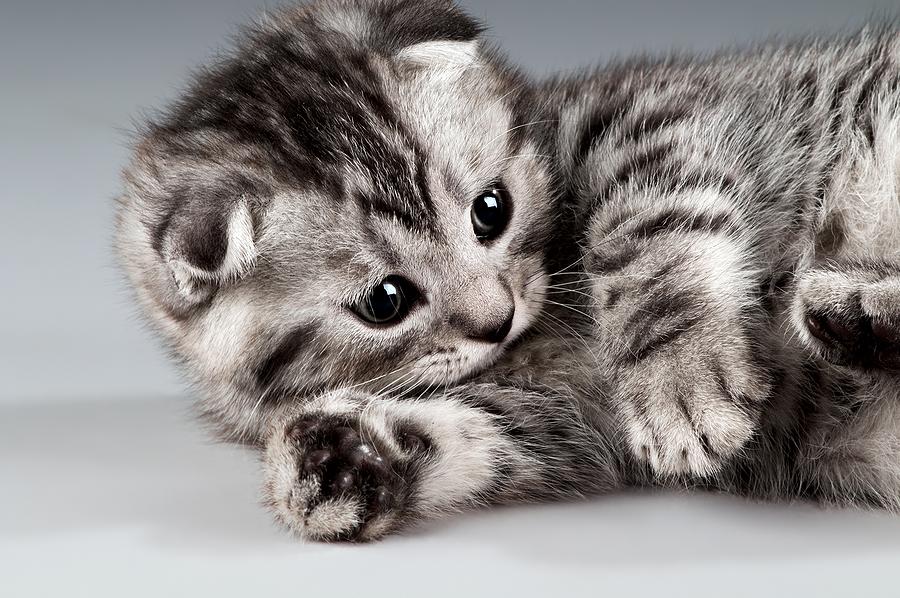 bigstock-Kitten-29358236
