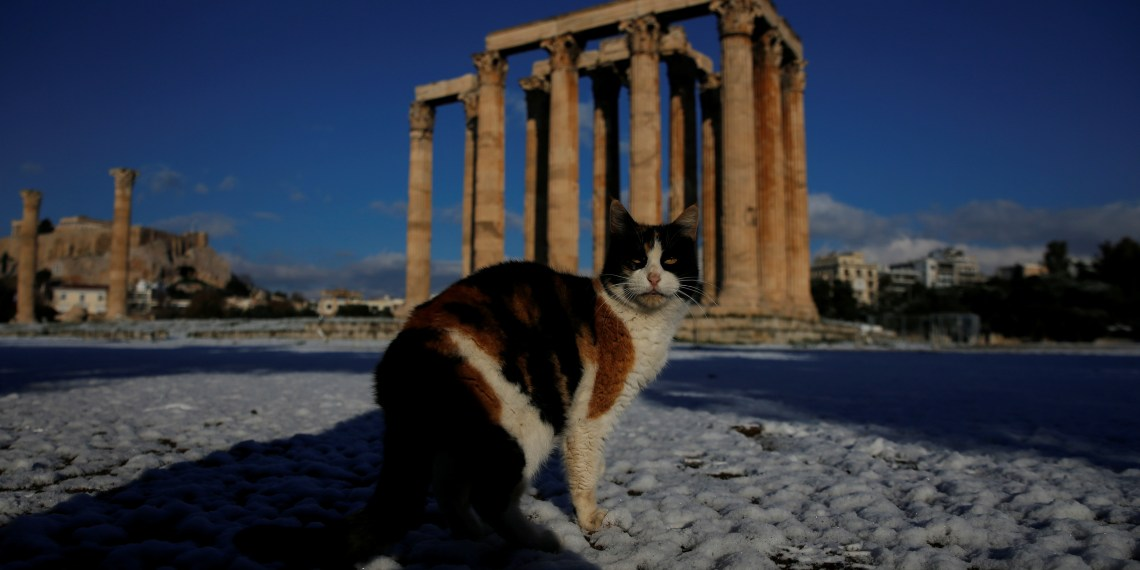 A cat is seen inside the archaeological site of the ancient Temple of Zeus following a snowfall in Athens, Greece, January 8, 2019. REUTERS/Alkis Konstantinidis