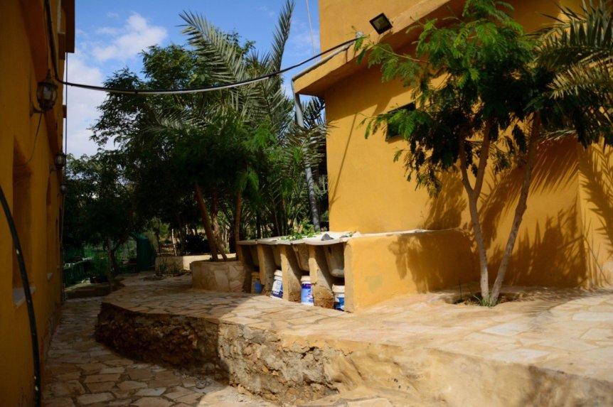 Beim Begrünen der Wüste werden Techniken wie das gegenseitige Anpflanzen von Bäumen, die Gewinnung von Wasser und das Recycling von Ressourcen eingesetzt