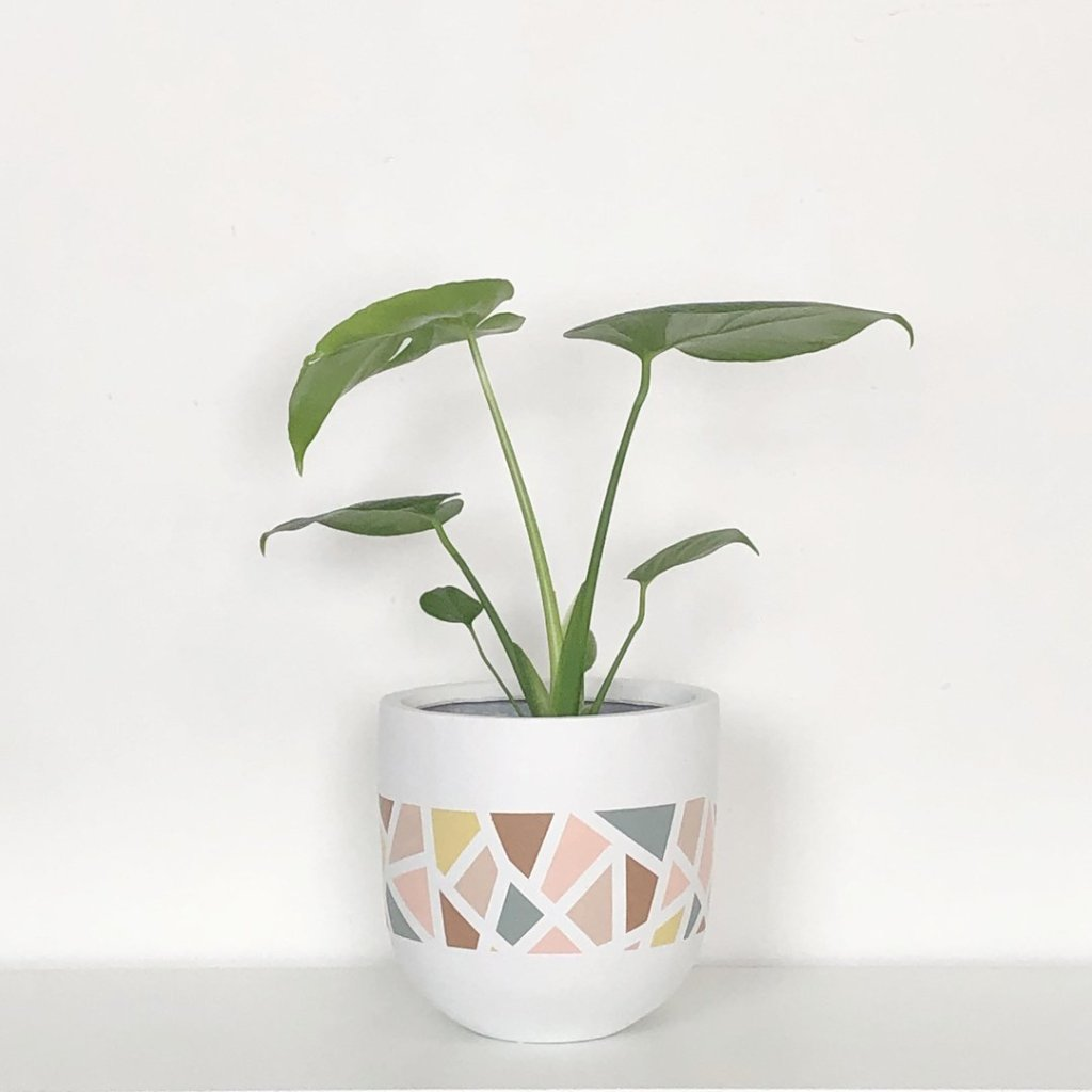 Common House Studio Planters