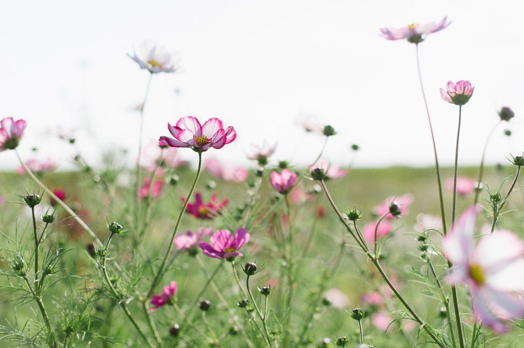 Sweet Gale Gardens Flowers