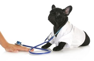 Veterinary services Oakland Park Wilton Manors Ft Lauderdale