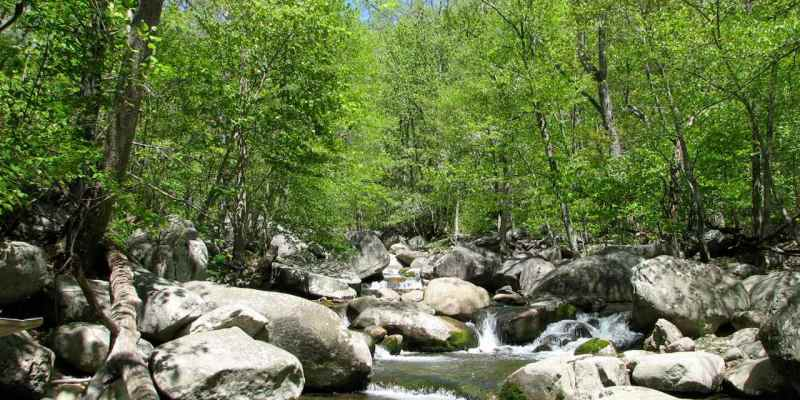 Five Great Virginia Streams for Tenkara (part 4)