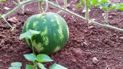 July 2015 - the lonely melon