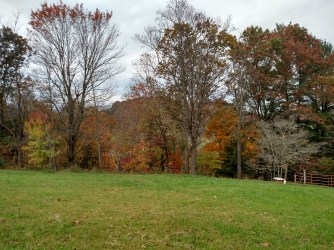 Oct 2015 - fall color2