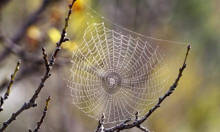 ¿La araña protectora? (Rep.)