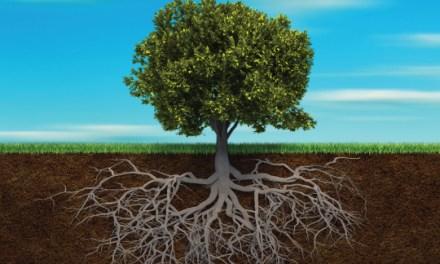 La raíz del problema