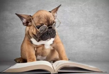 Fotos, Curiosidades, Comunicação, Jornalismo, Marketing, Propaganda, Mídia Interessante cachorro-inteligente Quem é mais esperto o cachorro ou o rabo? Curiosidades  Quem é mais esperto o cachorro ou o rabo?