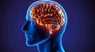cerebro2 - Ratinho desabafa e critica Justin Bieber e bomba no Twitter