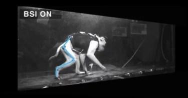 macaco recuperou movimento nas pernas sem fisioterapia 1478648712485 615x300