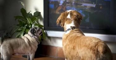 dog tv - Comerciais brasileiros antigos e inteligentes (preto e branco) anos 60 e 70
