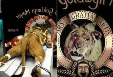 leaomgm4 - Como foi tirada a foto do leão da MGM?