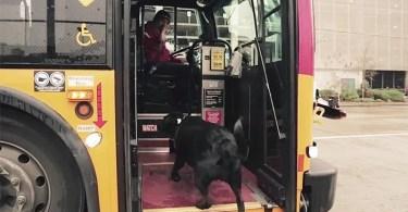 Curiosidades, Entretenimento, Jornalismo, Comunicação, Marketing, Publicidade e Propaganda, Mídia Interessante cachorro-pega-onibus Cachorro pega todos os dias ônibus para ir ao parque Cotidiano Curiosidades  cachorro pega onibus
