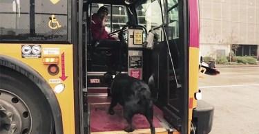 cachorro pega onibus - Doodle do Google faz homenagem a Machado de Assis